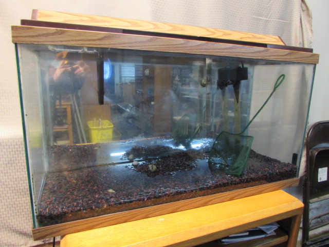 Lot detail 37 gallon filtered aquarium for 37 gallon fish tank